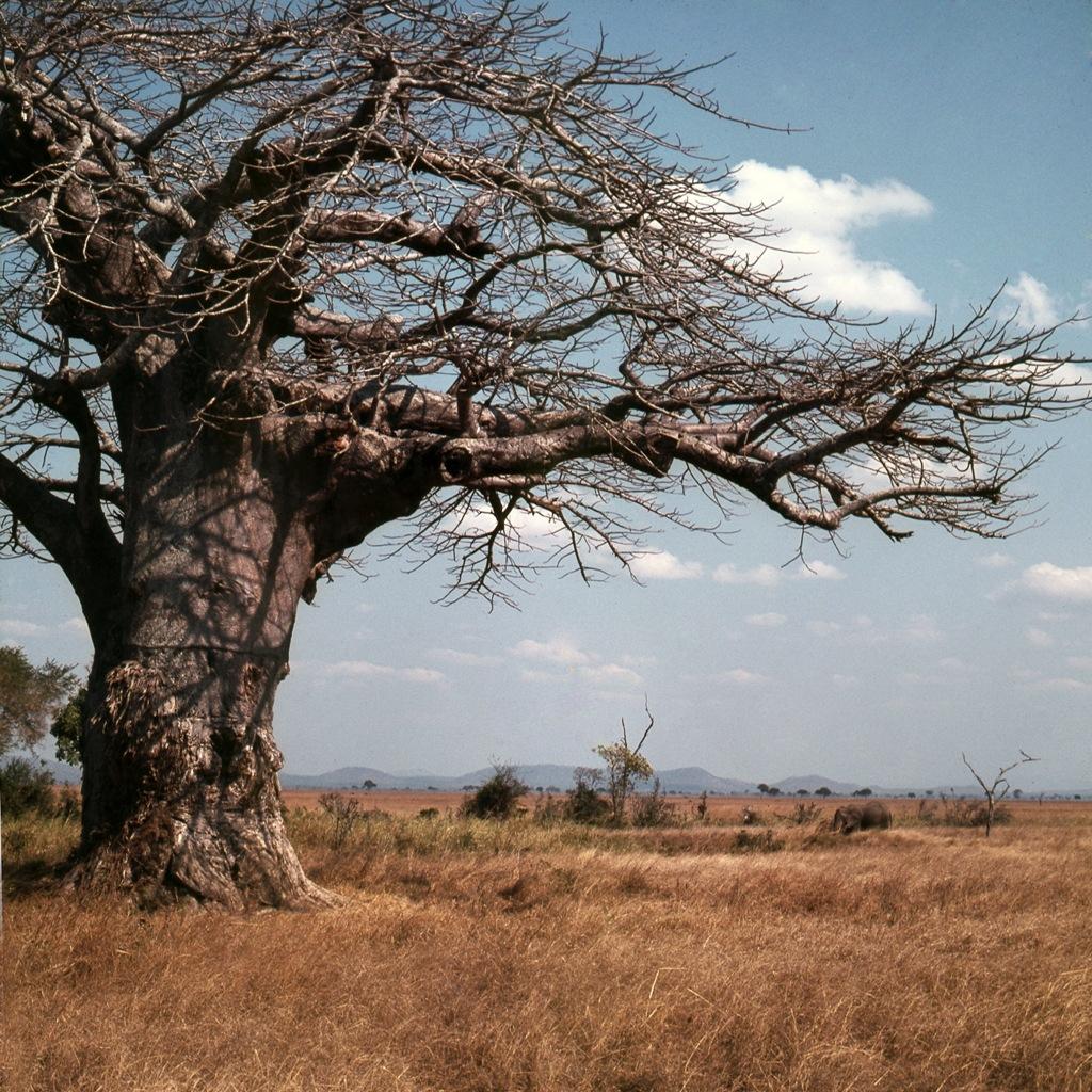 Afrikaans landschap Mikumi