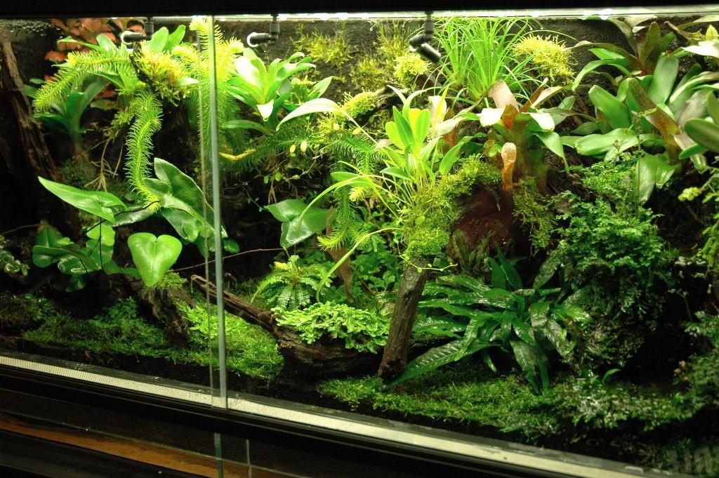 Regenwoudterrarium
