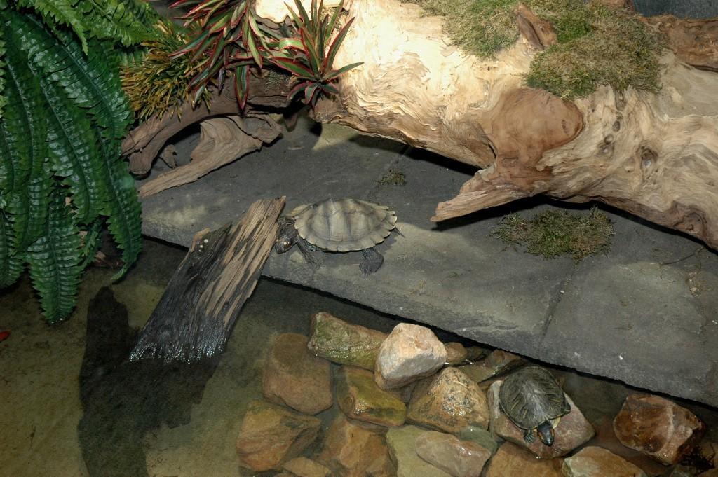 Waterschildpadden
