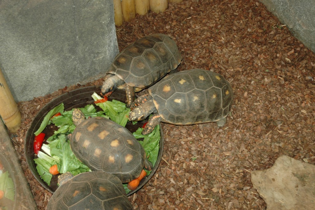 Woudschildpadden
