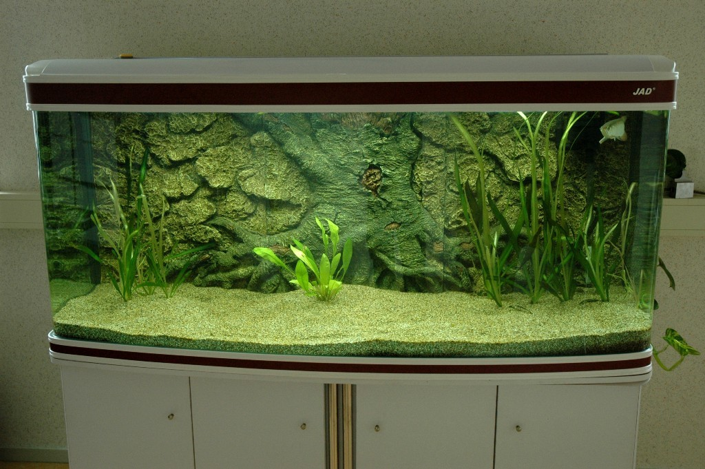 Een overzichtsfoto van het aquarium op het kantoor van Ruban.