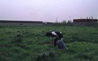 Treksprinkhanen kwekenbetekent: gras plukken