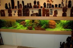 Mijn tropisch gezelschapsaquarium, circa 1.000 liter.