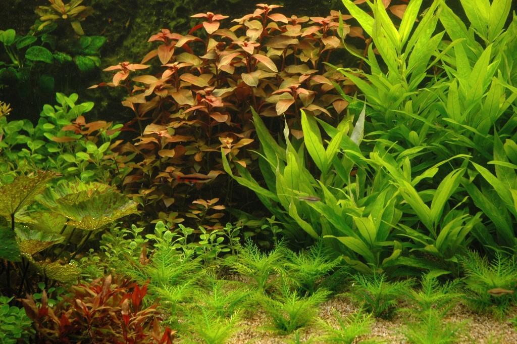 Plantengroep 1