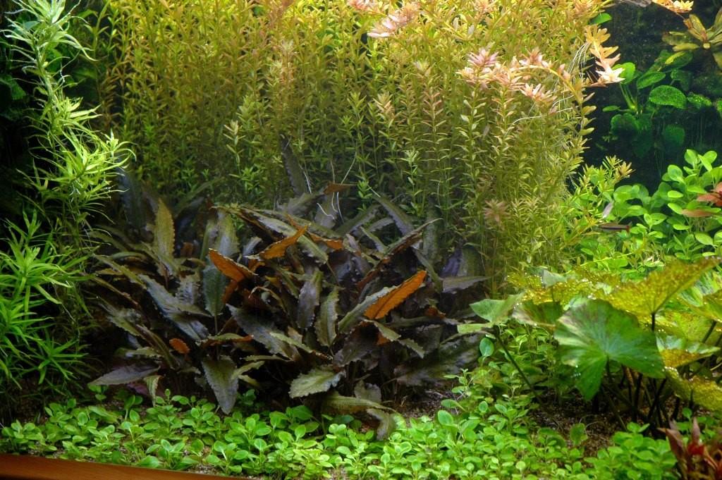 Plantengroep 2