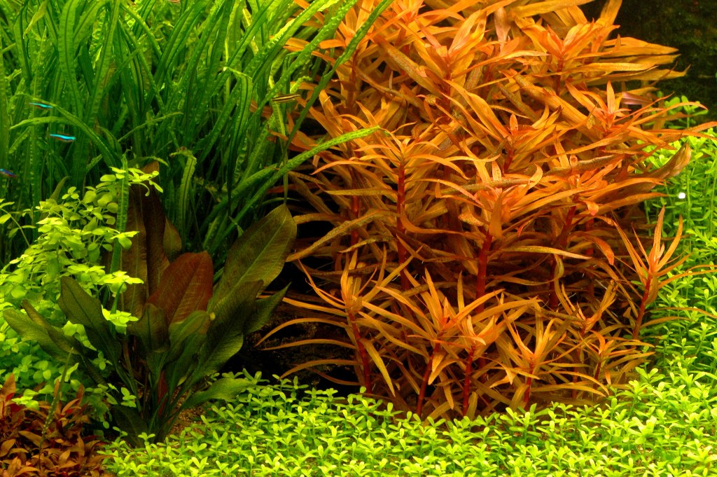 extra fosfaat voor waterplanten in aqua