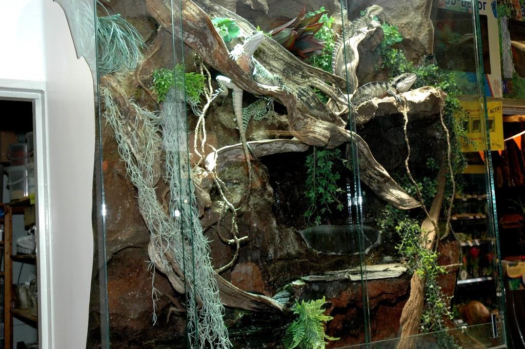 Terrarium met agamen