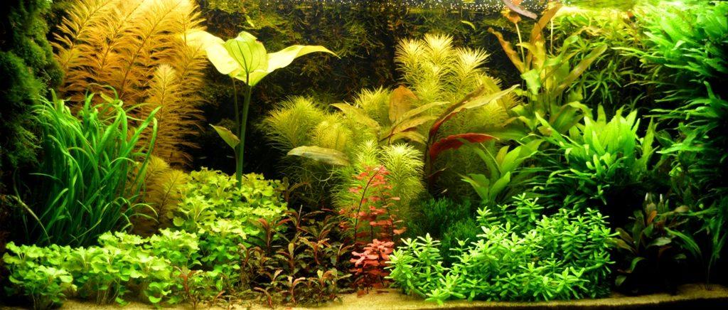 Het aquarium van Jaap Liefting
