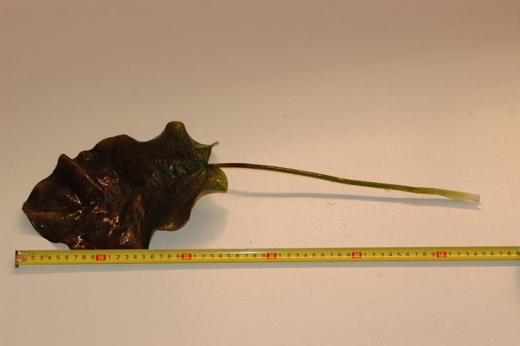 Echinodurus kleiner bär.