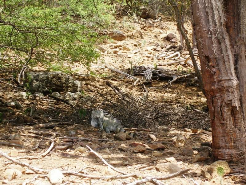 Biotoopfoto Bonaire Fred Sleebe