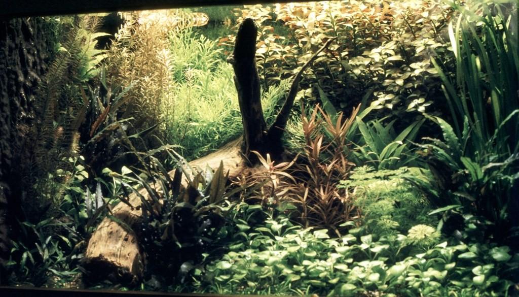 Mijn tropisch gezelschapsaquarium in Delft.