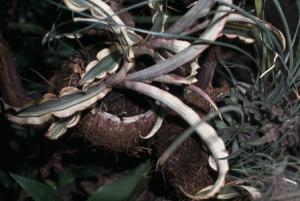 Paludarium plantjes in potten