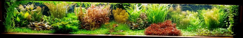 Mijn aquarium, gefotografeerd 20 oktober 2015.