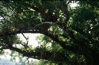 Reptilion Een plaatje van het regenwoud