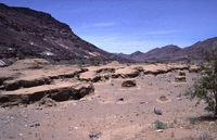 Reptilion Namib woestijn