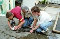 Reptilion De krokodillen moeten weg bijIntratuin Zoetermeer