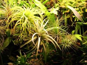 Tom Biesot 002 Een deel van de prachtige plantenbak