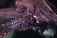 Voor het kweken van fruitvliegen bestaan heel veelrecepten.