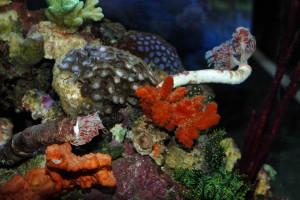 Zeewateraquarium.