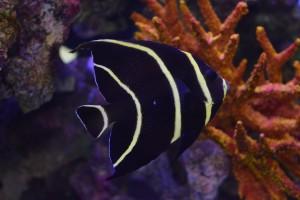 zeewateraquarium 005