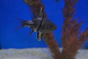 zeewateraquarium 009
