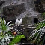 Het Bali Bird Park en het daarbij behorende Reptilarium. Een korte impressie.