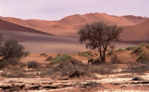 Namibie- Zuid Afrika, 1992 nr 0017