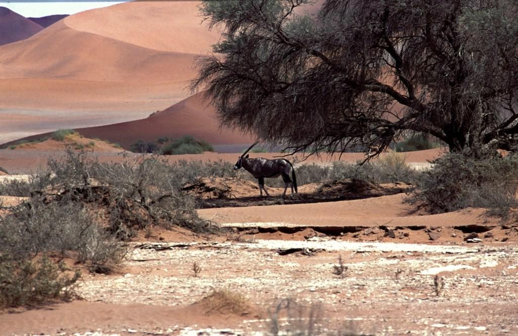 Namibie- Zuid Afrika, 1992 nr 0019
