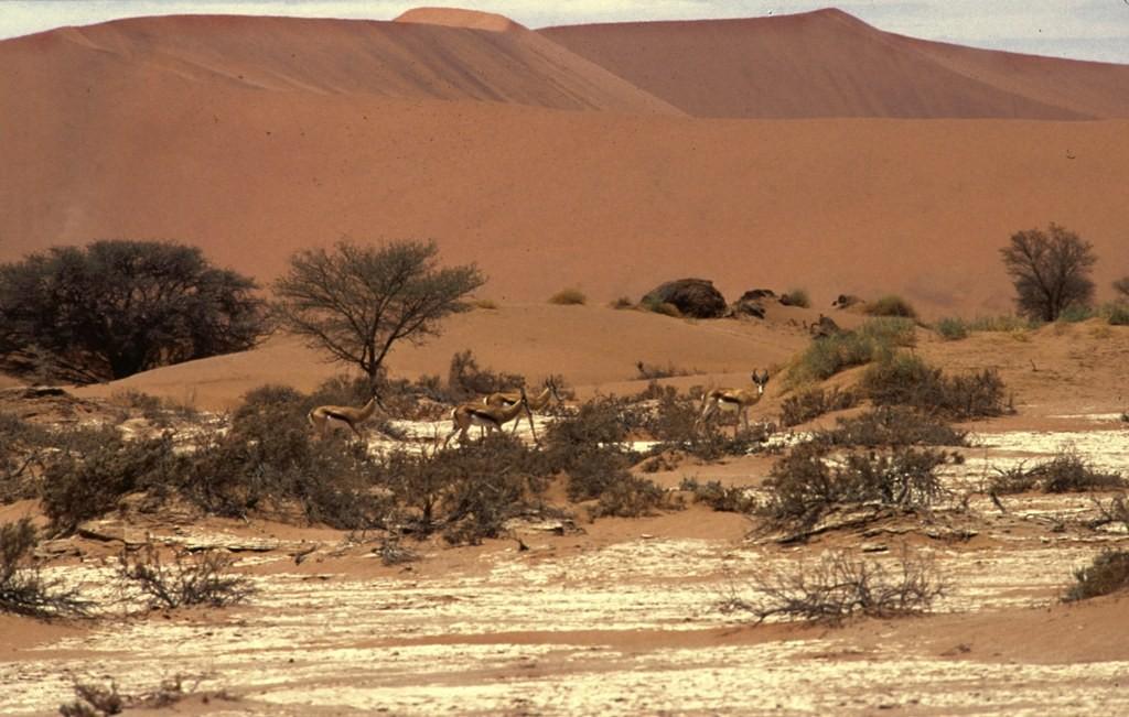Namibie- Zuid Afrika, 1992 nr 0025