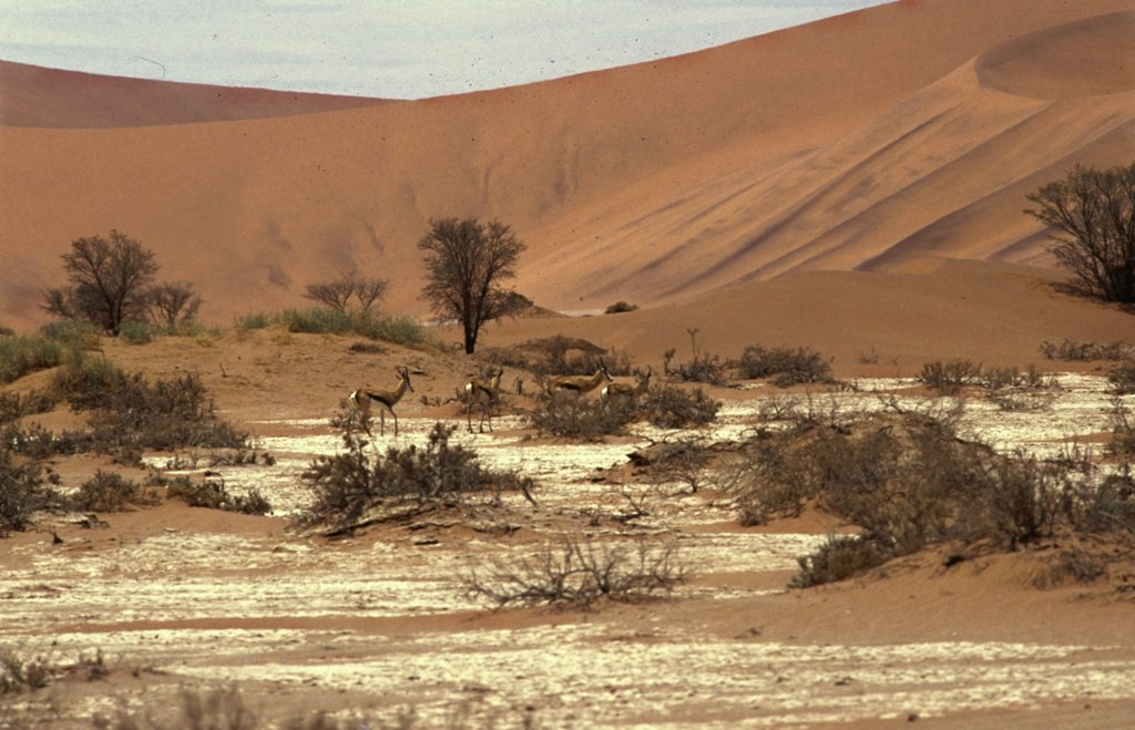 Namibie- Zuid Afrika, 1992 nr 0026