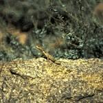 Namibie- Zuid Afrika, 1992 nr 0184