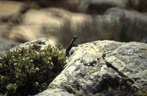 Namibie- Zuid Afrika, 1992 nr 0188