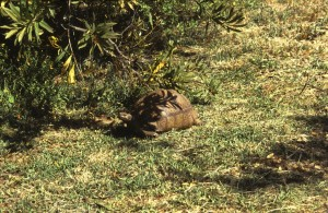 Namibie- Zuid Afrika, 1992 nr 0203