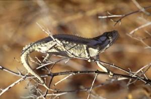 Namibie- Zuid Afrika, 1992 nr 0222