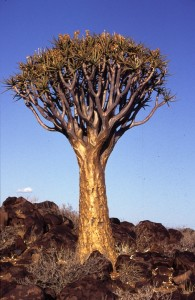 Namibie- Zuid Afrika, 1992 nr 0305