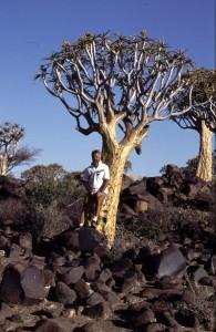 Namibie- Zuid Afrika, 1992 nr 0306