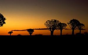 Namibie- Zuid Afrika, 1992 nr 0308