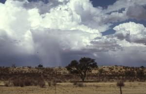 Namibie- Zuid Afrika, 1992 nr 0314
