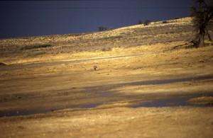 Namibie- Zuid Afrika, 1992 nr 0315