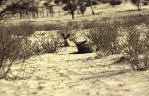 Namibie- Zuid Afrika, 1992 nr 0317