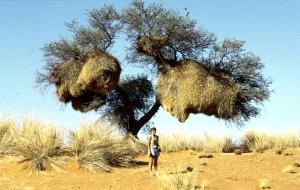 Namibie- Zuid Afrika, 1992 nr 0367