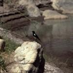 Namibie- Zuid Afrika, 1992 nr 0386