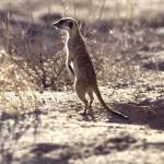 Namibie- Zuid Afrika, 1992 nr 0482