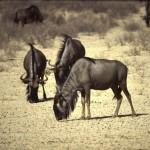 Namibie- Zuid Afrika, 1992 nr 0484
