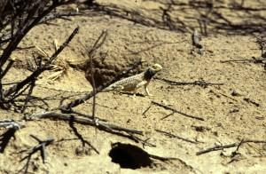 Namibie- Zuid Afrika, 1992 nr 0486