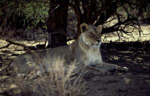Namibie- Zuid Afrika, 1992 nr 0542