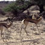 Namibie- Zuid Afrika, 1992 nr 0546