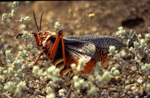 Namibie- Zuid Afrika, 1992 nr 0601