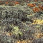 Namibie- Zuid Afrika, 1992 nr 0607