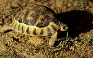 Namibie- Zuid Afrika, 1992 nr 0611